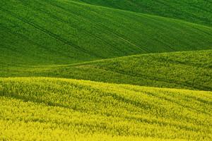 Narodowe Wyzwania w Rolnictwie 2020